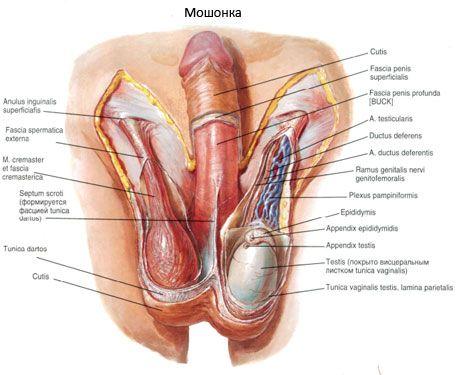 Prostatitis Moshonka